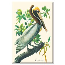 Brown Pelican by John James Audubon Painting Print on Canvas