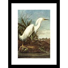 <strong>Buyenlarge</strong> Snowy Egret Framed and Matted Print