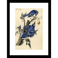 Blue Jay by R.Havell Framed Painting Print