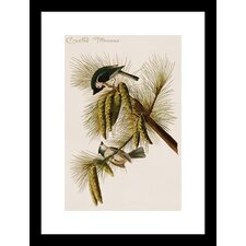 <strong>Buyenlarge</strong> Crested Titmouse Framed and Matted Print