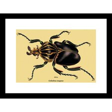 <strong>Buyenlarge</strong> Beetle African Goliathus Magnus #2 Framed and Matted Print