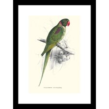 Footed Parakeet Psittacula Eupatria Framed Graphic Art