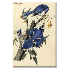 Blue Jay Graphic Art on Canvas