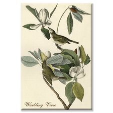 <strong>Buyenlarge</strong> Warbling Vireo Canvas Wall Art