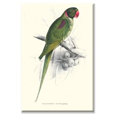 <strong>Buyenlarge</strong> Footed Parakeet Psittacula Eupatria Canvas Wall Art