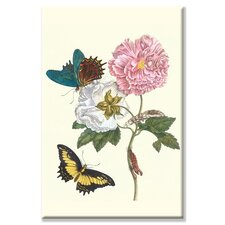 Cotton Rose Mallow with a Queen Swallowtail Graphic Art on Canvas