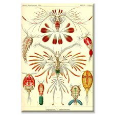 Crustaceans Canvas Wall Art