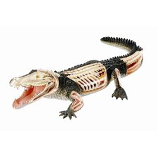 4D Vision Crocodile Anatomy