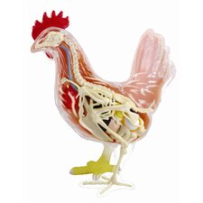 4D Vision Chicken Anatomy Model