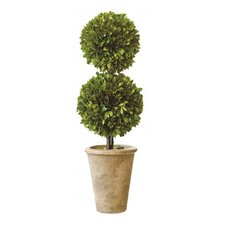 <strong>Mills Floral</strong> Box Double Ball Topiary in Pot