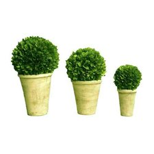 Boxwood Balls In Pot Set