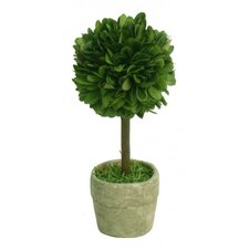 Boxwood Single Mini Topiary in Pot