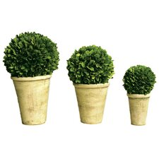 3 Piece Boxwood Balls in Pot