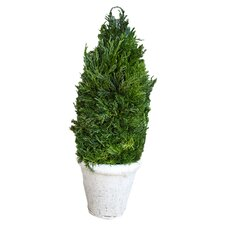 Cypress Cone Topiary in Pot