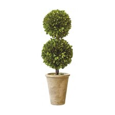 Box Double Ball Topiary