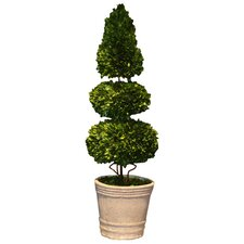 Boxwood Double Sphere and Cone Topiary in Pot