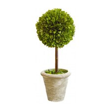 Box Large Single Topiary