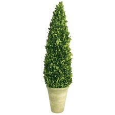 Boxwood Small Cone Topiary
