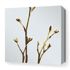 Botanicals Axis Stretched Graphic Art on Canvas