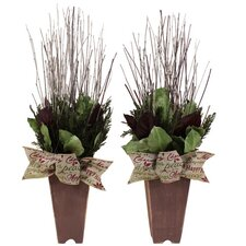 Holiday Cheerful Greetings Desk Top Plant in Planter (Set of 2)