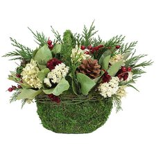 Holiday Fields Desk Top Plant in Basket