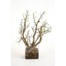 Bonsai Garden in Square Vase