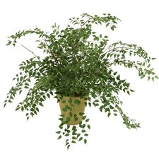 Silk Smilax Plant in Pear Garden Pot