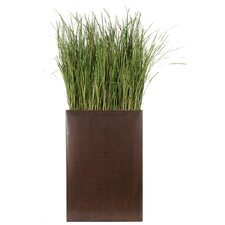 Tall Silk Grass in Plant Divider