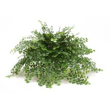 Topper Silk Maidenhair Fern on Tray