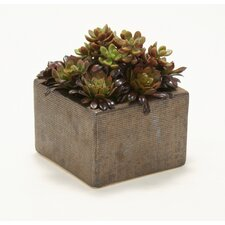 Faux Hen and Chick Succulents in Square Planter