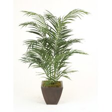 4' Areca Palm in Square Contempo Planter