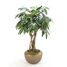 <strong>Distinctive Designs</strong> Trees and Topiaries Mango Floor Tree in Pot