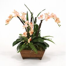 Artificial Phaleanopsis Orchid with Orchid Foliage in Square Wood Box