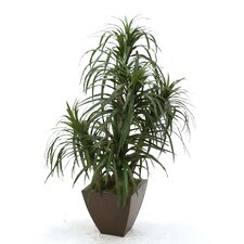 Silk Dracaena Marginata in Contempo Planter