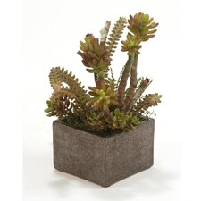 Faux Succulents with Desert Boxwood in Small Planter