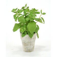 <strong>Distinctive Designs</strong> Silk Basil Spray Floor Plant in Pot