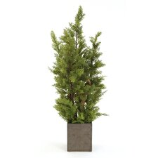 Silk Cypress Tree in Square Crystal Planter