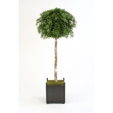 "78"" Podocarpus Topiary Tree in Large Square Wooden Planter with Finials"