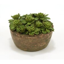 Silk Hen and Chicken Floor Plant in Pot