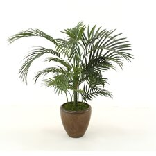 Palm Floor Plant in Planter
