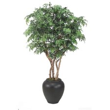 <strong>Distinctive Designs</strong> Ming Aralia Tree in Planter