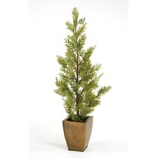 Miniature Silk Cypress Trees, Each in Square Metal Planter