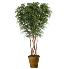 "84"" Ming Aralia Tree in Medium Sierra Patio Pot"