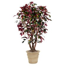 <strong>Distinctive Designs</strong> Red Ficus Tree in Planter