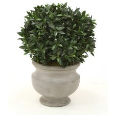 Sweet Bay Single Ball Floor Plant in Urn