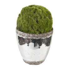 Faux Moss Ball Topiary in Ceramic Pot