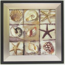 Kitchen Shell Framed Graphic Art