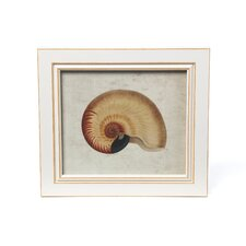 Seashell Framed Graphic Art