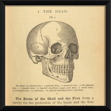 Physiology Skull Wall Art