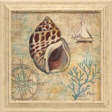 <strong>Artistic Reflections</strong> Discovery Shell IV Framed Art